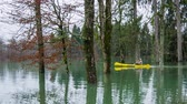 sonhador : Person in kayak rowing through flooded forest. Wide shot of male in yellow boat rowing through forest deep flooded in water. Vídeos