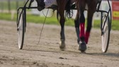 pull forward : Tracking horse hooves pulling a sulky cart close up . Trotter slowly doing circles around hippodrome. Horse walking in trot. Stock Footage