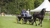 Carriage with black horse drive away 4K. Two person driving with traditional transportation black carriage with black horse in front. Big lawn in background.