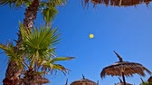 Yellow parachuter flying behind palm tree. Wide shot of big blue sky and one parachute flying in air. Palm tree and straw umbrellas in front. Stock Footage