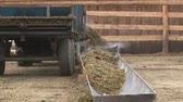 cartn corrugado : Tractor goes round fodder in the farm for cattle