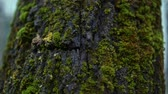verão : moss on a tree in the forest