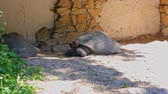 тварь : 2 big turtles on the street in the village