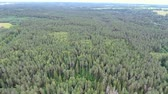 Flying over green summer forest. Latvia