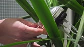 window gardening : Yucca tree washing at home