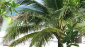 Palm trees in the wind on a white beach with few tourists -  fixed camera closeup view