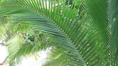 причал : Palm tree leaves blowing in the wind in a warm place -  fixed camera closeup view Стоковые видеозаписи