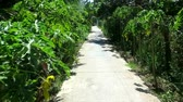 舗装された : Walking along a little street with shadows of green trees and bushes -  moving camera medium shot