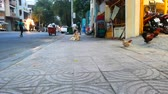 ボディーガード : Hens on a sidewalk walking back home and a dog following them  -  fixed camera wide shot