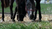 galope : Horse eating grass in stable