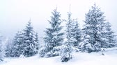 Beautiful winter landscape with snow covered trees. Winter mountains. Dostupné videozáznamy