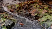 falésias : Mountain waterfall. A source. Waterfall. Healing water. Water. Golden autumn.