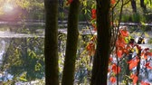 vislumbre : the river with leaves in backlight with the colors of autumn Stock Footage