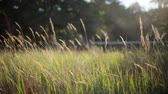 border : Iron fence in summer field  focus in out. Green grass on background. Focus in out Stock Footage