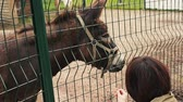 Woman feeding donkey in aviary behind the green fence. Zoo. Animals. Summer day