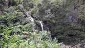 гавайский : Waterfall in Maui Hawaii Стоковые видеозаписи