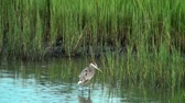 santuário : Great Blue Heron with birds flying by Stock Footage