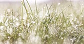 desfocagem : Shining drops on grass