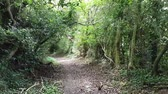 wales : First-person view video footage walking down a green country lane with low hanging trees across the path.