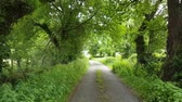 first person view : First-person view video footage walking down a lane in Mold, North Wales with trees and overgrown bushes either side. Stock Footage