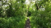 first person view : First-person view video footage on a sunny day in Mold, North Wales walking down a woodland path. Stock Footage