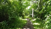 dráha : First-person view video footage walking down a woodland pathway on a sunny day in Mold, Flintshire, North Wales.