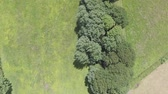 obalované : Aerial footage flying over tree covered path and field on a windy day in Flintshire.