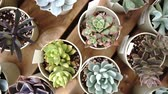 непосредственно : Succulent plant taken from directly above Стоковые видеозаписи