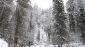 осадки : Heavy Snowfall in A Winter Forest. Altai, Siberia.
