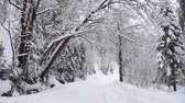 Winter Forest. Wideo