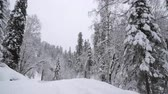 Heavy Snowfall in A Winter Forest. Altay, Siberia.