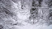 floco de neve : Snowfall in the forest. Walk through snowy path in winter forest.