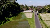 local : HD aerial drone footage of flying over rice fields in Ubud area, tropical island of Bali.