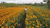 malmequer : 4K aerial flying video of woman on a marigold field. Beautiful travel concept. Bali island.