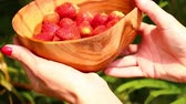 morangos : Women hands with strawberry in a wooden bowl.