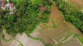 ферма : Flying over rice terrace fields, green 4K drone footage. Bali island, Indonesia.