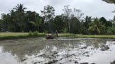 grain growing : Senior asian farmer plowing rice paddy field using tractor. Bali island, Indonesia.