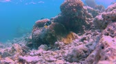 tentáculo : Clownfish and their anemone at an islands coral reef Timelapse Vídeos