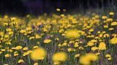 saturado : v2. Slider shot of wild flowers. Stock Footage