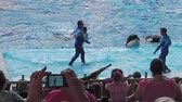 à beira da piscina : Orlando, Florida, United States - April 22, 2012: two dolphins jumping in Azul Show at Seaworld. Seaworld is an animal theme park, oceanarium and to a marine mammal park. Vídeos