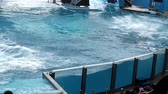 antonio : Orlando, Florida, United States - April 22, 2012: three killer whale jumping together at Seaworld. Seaworld is an animal theme park, oceanarium and to a marine park.