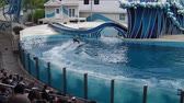 seaworld : Orlando, Florida, United States - April 22, 2012: two dolphins performs a riding in Azul Show at Seaworld. Seaworld is an animal theme park, oceanarium and to a marine park.