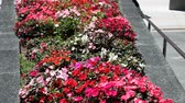 сувениры : San Francisco, CA, USA - August 17, 2016: flowers in Union Square, of San Francisco, with tourists and cable car