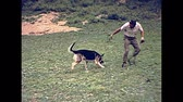 США : New York, United States of America - circa 1970: man playing and running with his dog in Central Park, on seventy, old Manhattan. vintage footage. Стоковые видеозаписи
