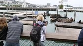 caído : San Francisco, California, United States - August 14, 2016: tourists looking the popular Sea Lions on wooden platforms. Pier 39 at Fishermans Wharf district. American travel in San Francisco.