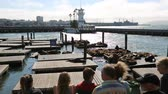 caído : San Francisco, California, United States - August 14, 2016: tourists looking the popular Sea Lions Colony on wooden platforms. Pier 39 at Fishermans Wharf district.San Francisco cityscape and skyline Stock Footage