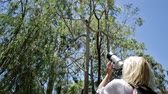 cinereus : Wildlife woman taking pictures of a Koala while sleeping on a branch of eucalyptus in Yanchep National Park, Western Australia. Travel female photographs outdoor a Koala on a tree.