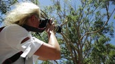 cinereus : Wildlife woman photograph taking pictures of a Koala sleeping on an eucalyptus tree in Yanchep National Park, Western Australia. Travel female photographing a Koala on a tree.