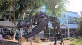 google campus : Mountain View, California, United States - August 13, 2018: Tyrannosaurus Rex skeleton at Googleplex Headquarters main campus in Silicon Valley, CA.