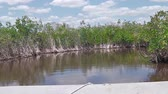 hovercraft : POV by speed airboat in Everglades National Park, Florida in United States of America. Popular tourist destination to see typical vegetation and alligators.